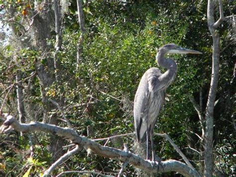 Swamp Animals of Louisiana | Jean Lafitte Swamp Tours