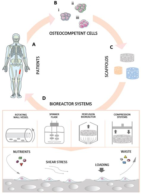 Processes   Free Full-Text   Bioreactor Systems for Human