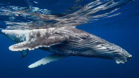 Whale Sea Nature Water - Wallpapers HD