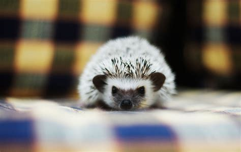 Facts About Exotic Pets You Can Own, Because Calgary Pet